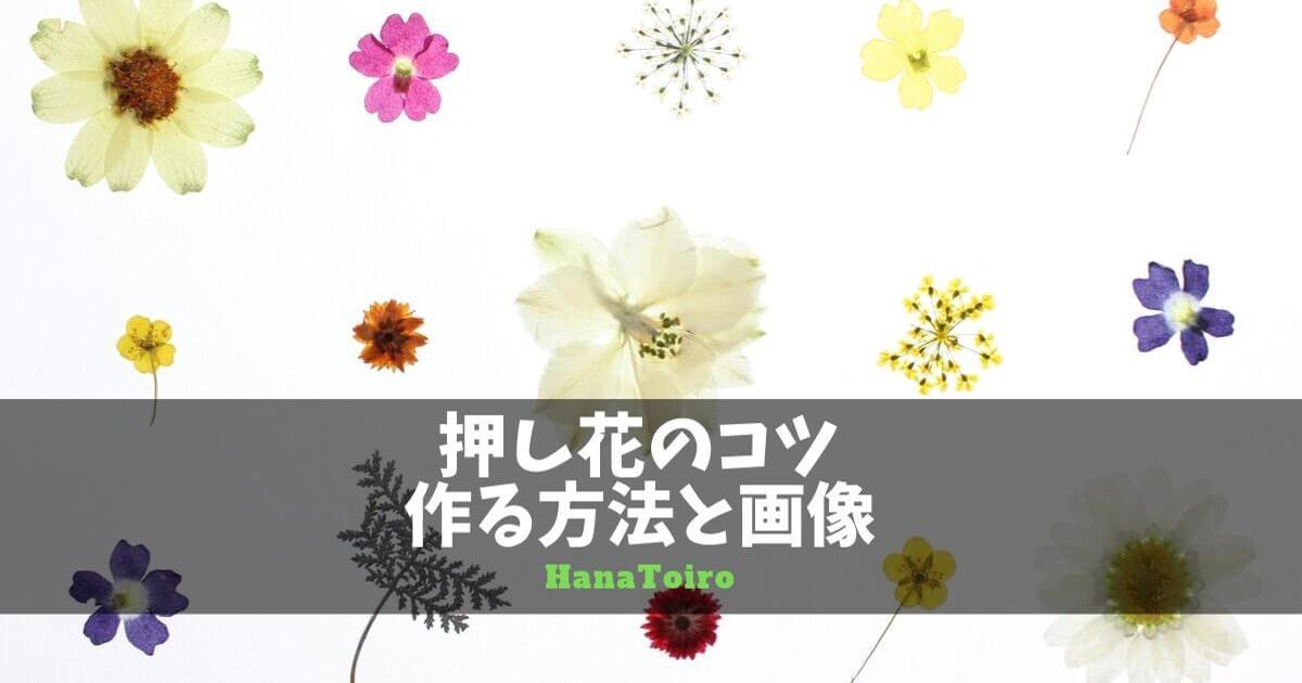 押し花を作る方法とコツ・画像