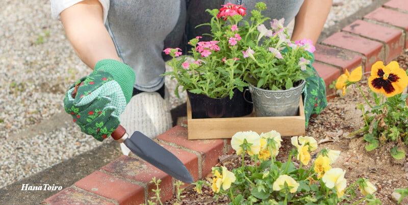 秋に苗を植える