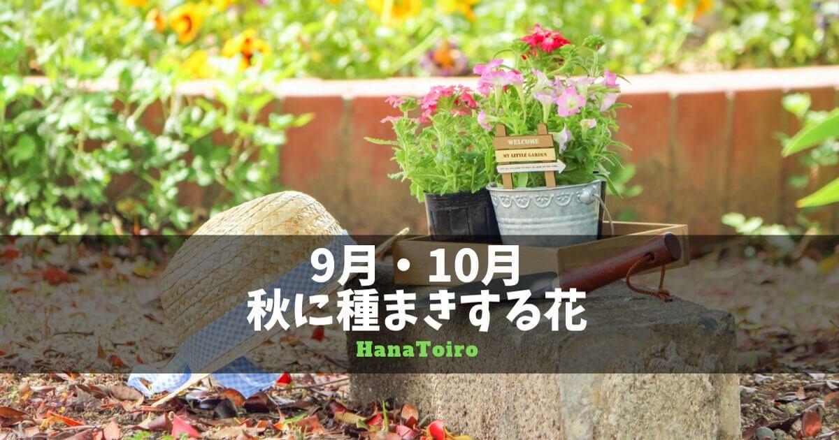 9月、10月の秋に種まきする花