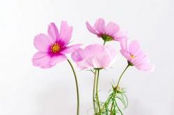 結婚式の花選び・秋の花の種類と色