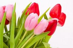 結婚式・春の花の色と種類