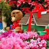 クリスマスに贈る花【プレゼントにおすすめの花言葉と色と種類】