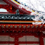 お花見を英語で説明できますか?日本の文化を外国人に伝えよう