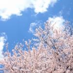 【お花見の服装・小物】デート、会社の宴会、夜桜鑑賞は何を着る?