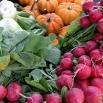 【家庭菜園】秋に野菜や果物を植えるコツ・植え付けと育て方は?