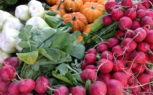秋の野菜を植える・育て方