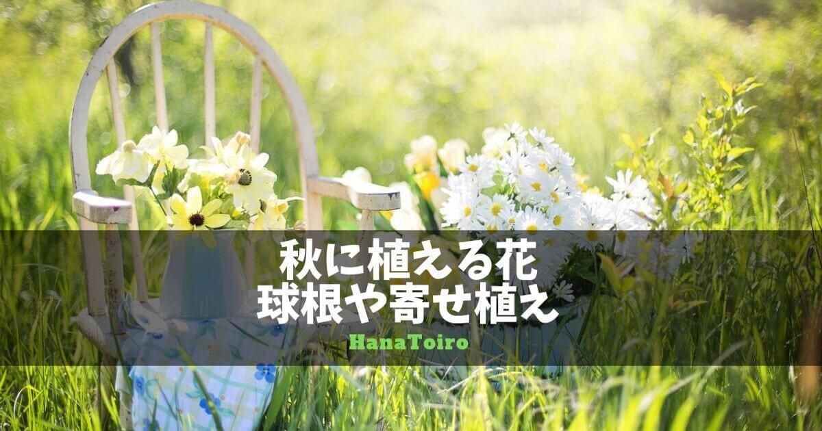 秋に植える花の球根や寄せ植え