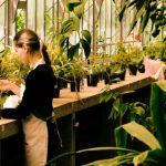 【寒さ対策】冬の観葉植物を守るために正しい水やりや枯れ防止を